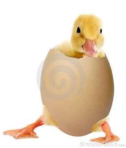 anatroccolo-un-uovo-16420173