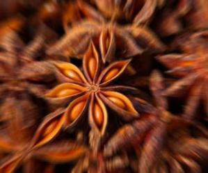 anice-stellato-immagine