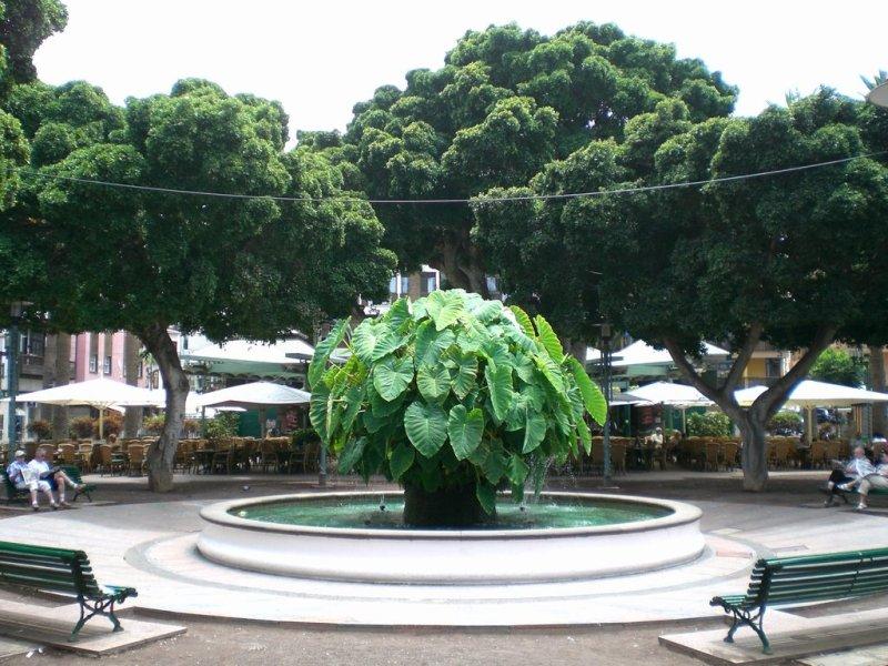 plaza charco